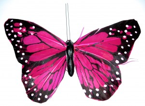 pink-butterflies-1014388